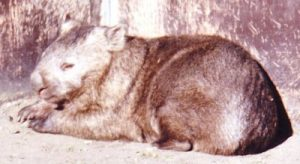 wombat-giftlog-small