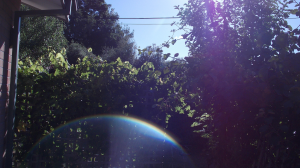 Reflected Rainbow in My Yard. 2 (C) Noelene Joy Rout 16th January 2013