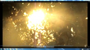 TheSunSpraying.2.Sun-Leaves-Vapour-Coins(C)-NJRoutthApril2013-006