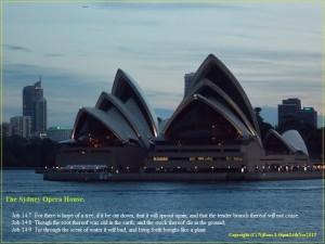 TheSydneyOperaHouse.(C)NjRout3.46pm24thNov2013 028