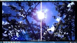 SatelliteDishinMyApricotTree.TheSun(C)NjRout11.39am22ndNov2015 027 PinkFaninMyApricotTree.