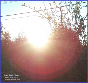 SunPinkFan. (C) NJRout Oct 2012 216