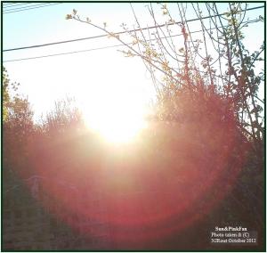 Sun&PinkFan.(C) NJRoutOct2012.216