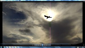 Seagull&GiganticCablesofTheSunatBondiBeach.10.BondiCopyright(C)NjRout6.05pm23rdNov2013 015 Sun&itsCableatBondiBeach
