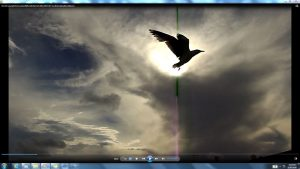 Seagull&GiganticCablesofTheSunatBondiBeach.4.BondiCopyright(C)NjRout6.05pm23rdNov2013 015 Sun&itsCableatBondiBeach