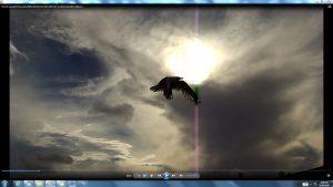 Seagull&GiganticCablesofTheSunatBondiBeach.7.BondiCopyright(C)NjRout6.05pm23rdNov2013 015 Sun&itsCableatBondiBeach